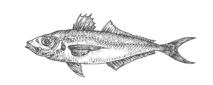 За попчета и сафрид в Черно море само с валиден риболовен билет