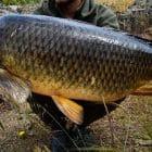 Шаранджийски риболов - 10 добри съвета