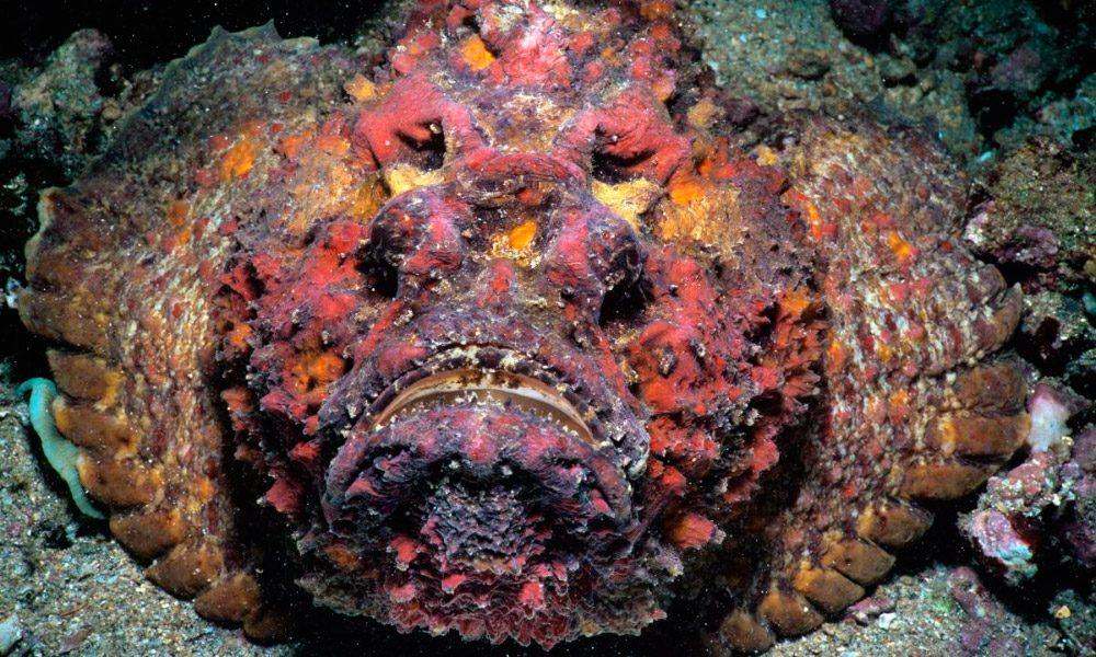 Най-отровните риби