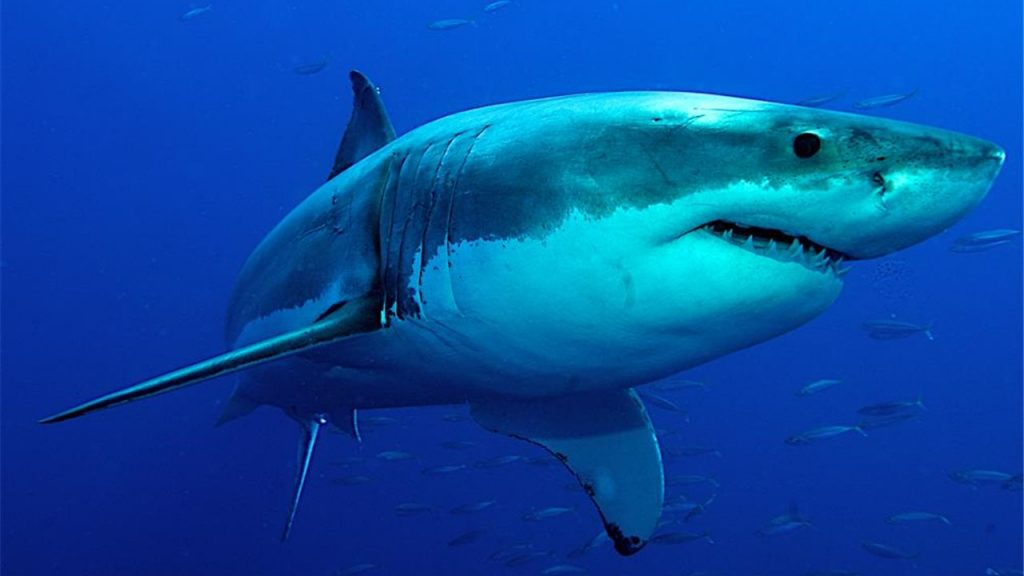 Най-опасната риба в света WeFish
