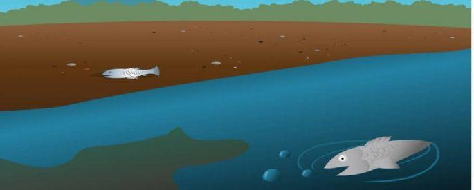 Мъртва риба в шуменски язовир