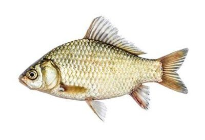 Рибки за стръв