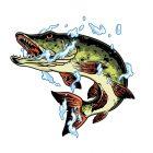 Хищни риби започнаха да се показват по язовирите