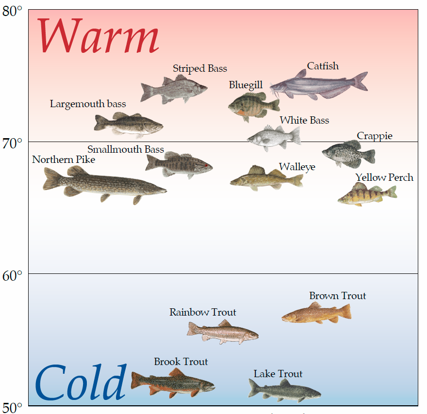 Водата умерена Предпочитана по видове