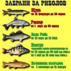 Забрани за хищните риби в България